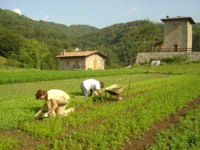 Cia Calabria: grave crisi nel settore delle clementine Nella Sibaritide, l'area a più alta vocazione agrumicola della Calabria, dove si concentrano i maggiori quantitativi di Clementine d'Italia e che rappresenta una quota importante del PIL del settore agricolo Calabrese
