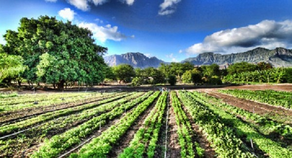 """Agricoltura: con l'attivazione del """"pegno rotativo"""" nuovo credito alle produzioni di qualità"""