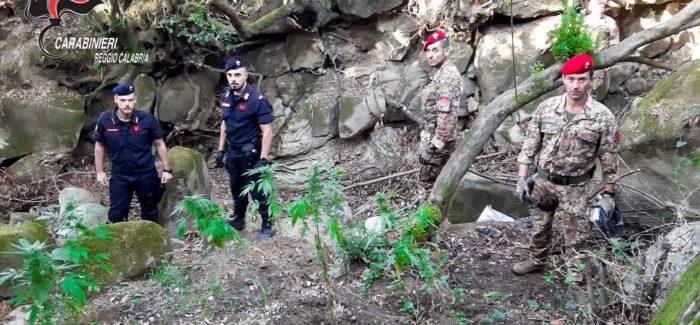 Droga a San Luca. I carabinieri scoprono altre due piantagioni Senza sosta  il lavoro  dell'arma contro il malaffare