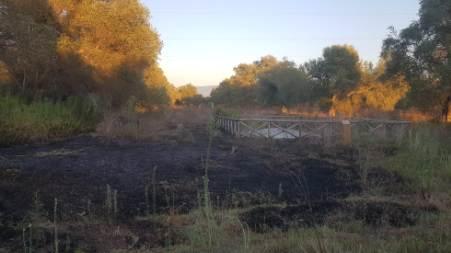 Rosarno, incendio Parco Archeologico di Medma La Lega ripetutamente ha chiesto una corretta gestione del Parco Archeologico per evitare che gli incendi, dato lo stato di palese ed evidente abbandono