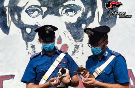 Salvati dai carabinieri sette cuccioli abbandonati nel reggino, denunciato un 23enne L'Arma continua a controllare il territorio, a tutela dell'ambiente e degli animali