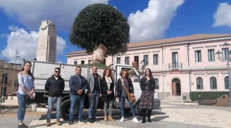 Taurianova, arrivato il primo albero di ulivo da impiantare in Piazza Libertà Riguarda l'abbellimento della piazza antistante il Municipio e si prevedono quattro alberi di ulivo